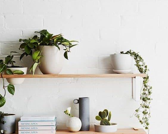 armoire plante et déco simple